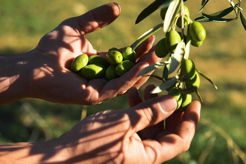Produzione olio extravergine di oliva